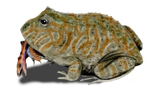 Prehistoric Frog Had a Monstrous Bite