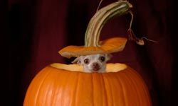Pumpkin aids digestion -- as well as making a good place to hide!