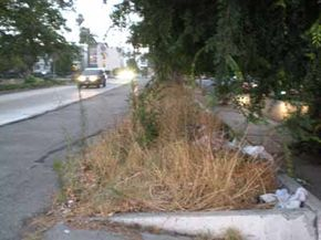 Where some people see an eyesore, others see potential. See more pictures of gardening.
