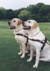 Guide dogs enable visually impaired people to navigate extremely complex environments. And these dogs are even smarter than you think. Find out what it takes to become a guide dog.