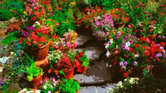 10 Things Your Garden Wishes You Knew