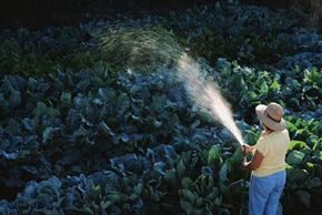 Watering is an important aspect of garden care.