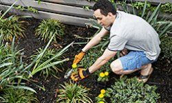 Start small to learn the basics and you'll have a gorgeous garden in no time.