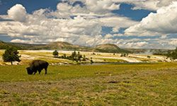 Bison are just one of the heftier mammals budding zoologists may encounter at Yellowstone.
