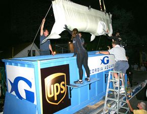 [b]Aquarium staff lower a beluga whale into its transport container.