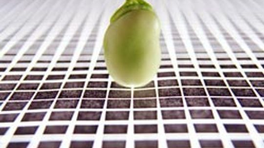 Genetically Modified Food Products Pictures