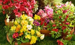 Prepare your garden now, so those blooms can bloom. See more pictures of annual flowers.
