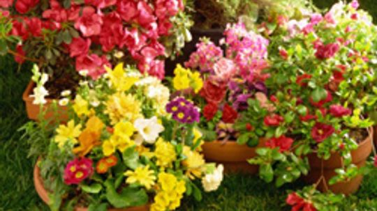 What You Need to Do Now to Get Your Garden Ready for Spring