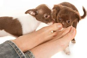 Dogs like to sniff feet no matter how they smell ... but people don't. See more men's health pictures.