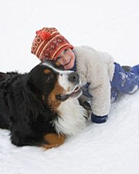 Bernese Mountain dogs are great with kids.