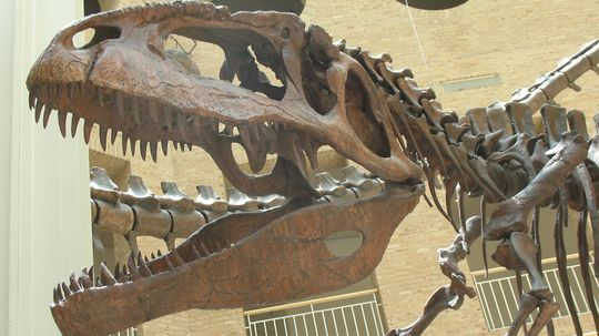 Giganotosaurus Was One of the Largest Carnivorous Dinosaurs That Ever Lived