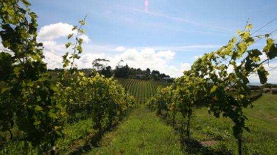 Ultimate Guide to the Gisborne Wine Region