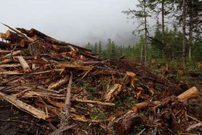 Deforestation accounts for 20 percent of greenhouse gas emissions.