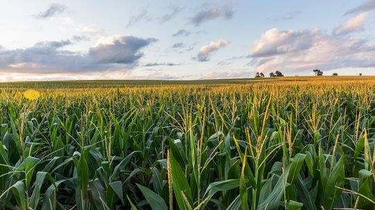 What Are Genetically Modified Organisms (GMOs)? Are They Safe?