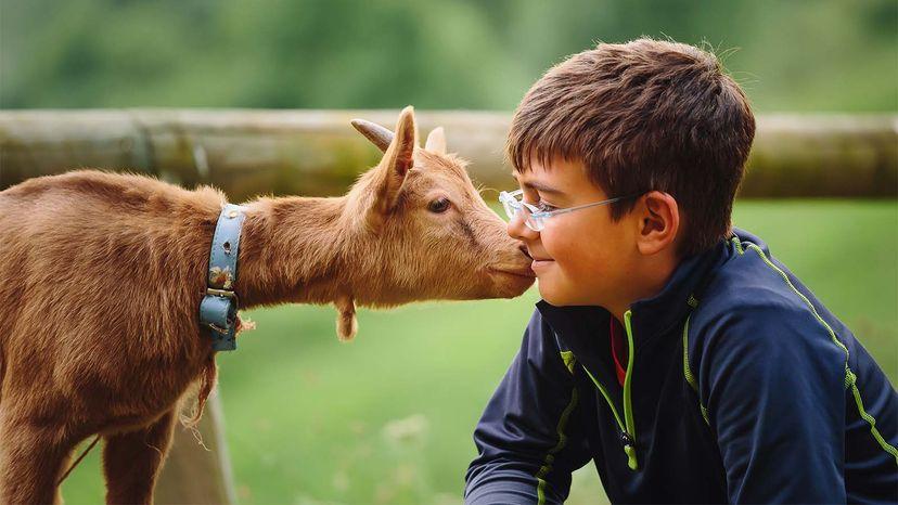 goats, smiles