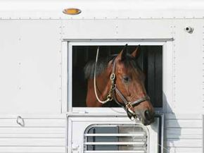 If you have a horse trailer, you might be in the market for a gooseneck hitch.
