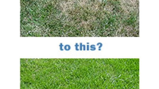 How Grass Works
