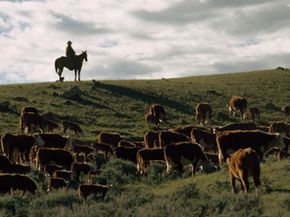 Grass banking enables ranchers like these to stay in business while protecting the land from development. See more lawn pictures.