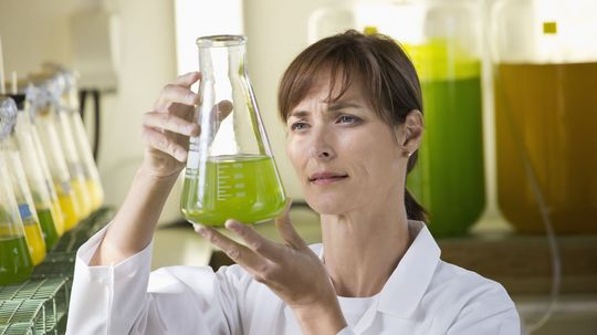 Grassoline: Can we fuel cars with grass?