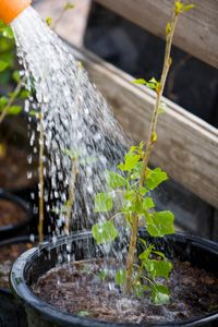For the most part, plants aren't as picky as people when it comes to drinking water.