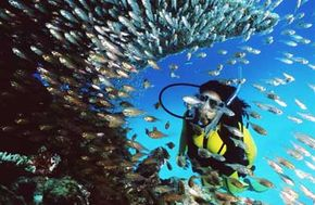 The Great Barrier Reef Marine Park is classified into zones that permit certain activities and ban others. Scuba divers enjoy access to much of the park.