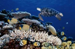 Marine Life Image Gallery The Great Barrier Reef's 3,000 reefs host a variety of marine life. See more pictures of marine life.