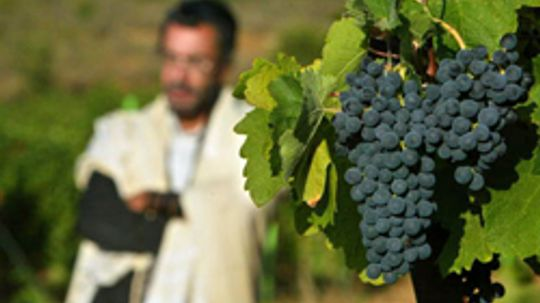 5 Great Kosher Wines