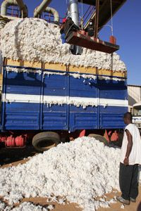Demand for organic cotton has driven production in countries like Burkina Faso.