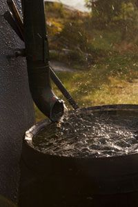 Rain barrels are a great place to start in the greening of your landscape.