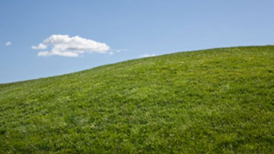 Top 5 Tips for Greening Your Lawn