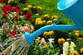 Taking your garden green could save you some money -- and the Earth's resources, too.