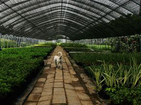 Flowers fill a greenhouse for the Beijing Olympic Games . See more greenhouse pictures.