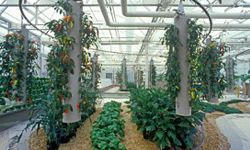 The greenhouses at Epcot practice hydroponic farming.