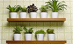 Use an arrangement of fresh plants to boost your home's eco factor.
