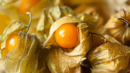 Rare Groundcherry Could Soon Be Everywhere, Thanks to Gene Editing