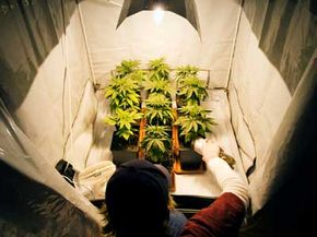 Operating a grow house is a little more involved than remembering to water the plants everyday.