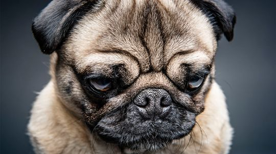 Strangers Are Better at Teaching Grumpy Dogs New Tricks, Study Says