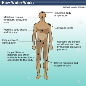 Why do humans need water?