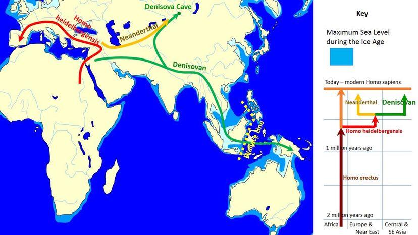 Denisovan movement