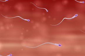 Sperm on the hunt for an egg