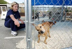 Dr. Linda Janowitz checks on some of the dogs at the Peninsula Humane Society & SPCA in San Mateo, California. See more pictures of pets.