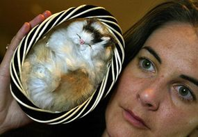 Humane Society International (HSI) spokesperson Nicola Beynon displays a toy cat purchased in Sydney, Australia whose face is made of real cat fur, at a press conference on July 10, 2003.