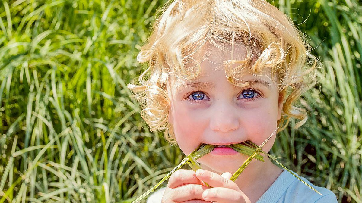 多くの動物が草を食べるのに、なぜ人間は食べないのですか?