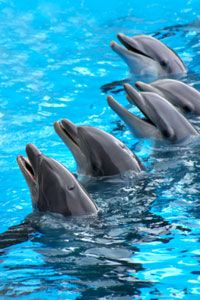 Dolphins seem smart, but we may never know for sure just how brainy they really are. See more dolphin pictures.