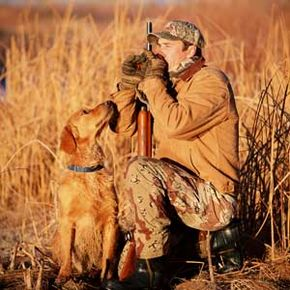 A faithful retriever watchesits master call ducks.