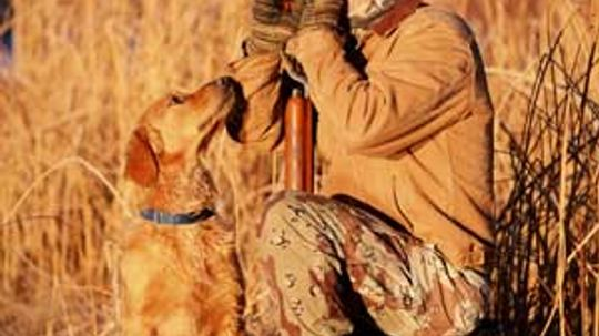 How Hunting Calls Work