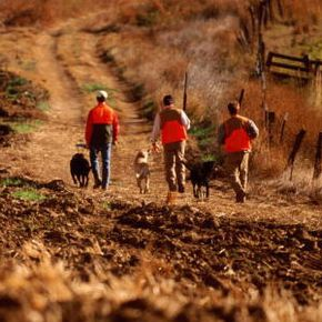 Three pheasant hunters with dogs on dirt road, in eastern Washington.