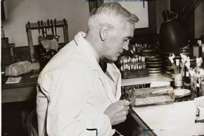 Dr. Alexander Fleming, discoverer of penicillin, at work in his laboratory in 1943.