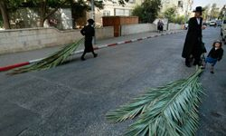 Members of the Jewish community in Jerusalem gather palm branches in preparation for the Sukkot festival.