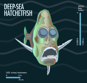 Hatchetfish can actually shift the intensity of their bioluminescence based on the light available from above to optimize camouflage.